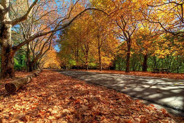 Mùa thu chuyển sắc vàng óng, đỏ rực