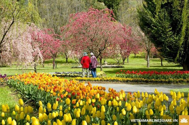 Trăm hoa đua sắc mùa xuân ở Úc